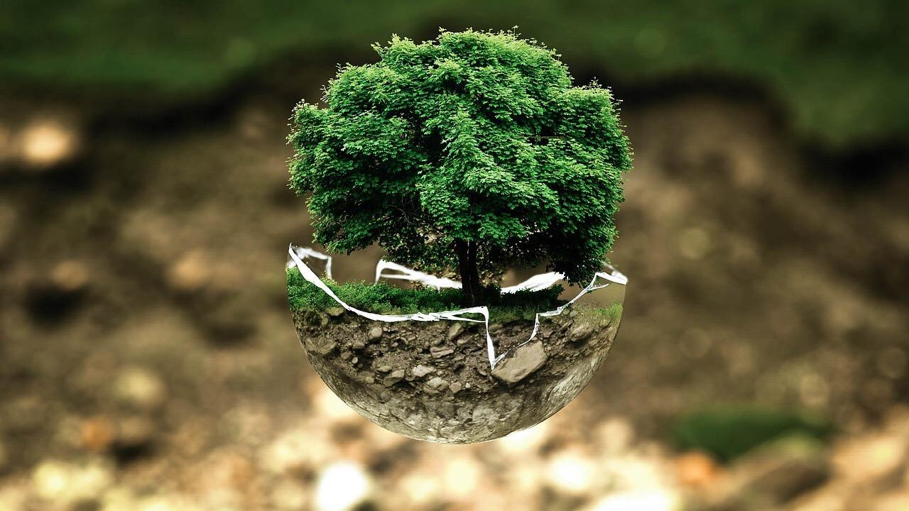 {Guest Post} Eco life – why you should go green